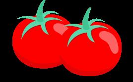tomates-v4